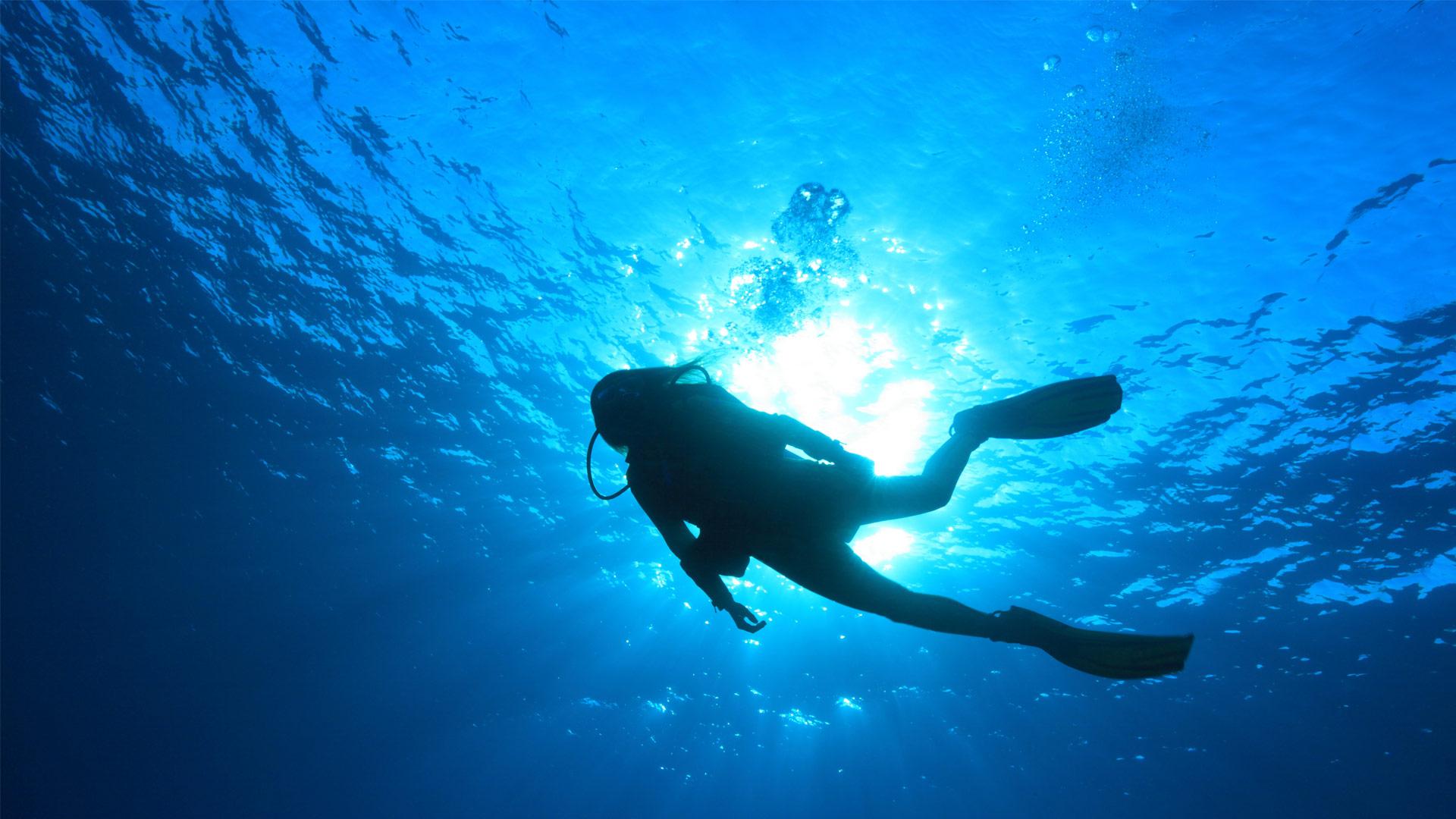 Term paper on scuba diving